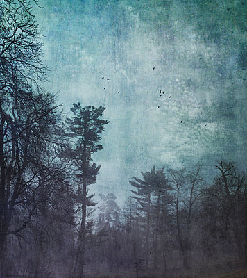 Germany, Wuppertal, forest at hazy dawn, textured photography - p300m1355829 by Dirk Wüstenhagen