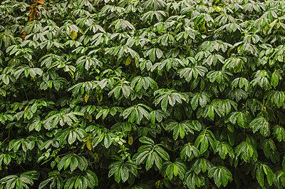 Blätterwald - p999m949661 von Monika Kluza