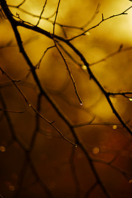 Water drop on a branch - p1228m2222523 by Benjamin Harte