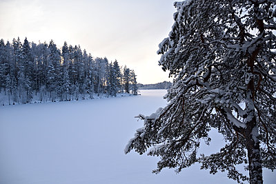 Pine forest by the lake at winter - p1235m2064693 by Karoliina Norontaus
