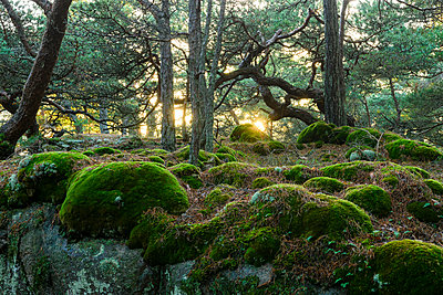 View of forest - p312m1570612 by Mikael Svensson