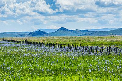 Wildflowers in field in Fairfield, Idaho, USA - p1427m2077542 by Steve Smith