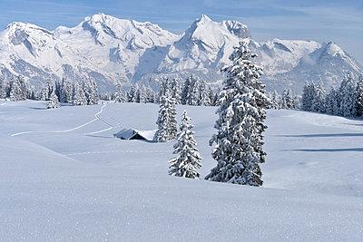 Deep snow - p880m822399 by Claudia Below