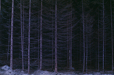 View of coniferous forest at night - p5755918f by Stefan Ortenblad