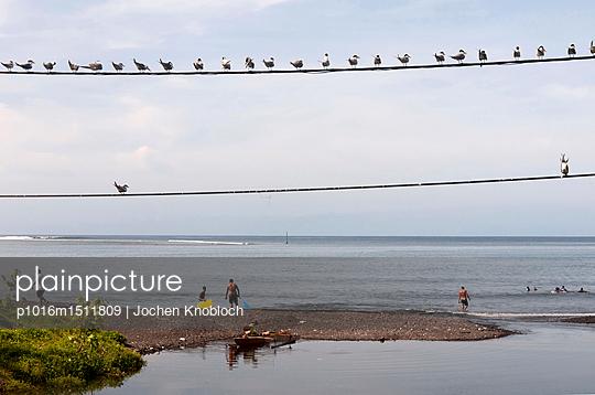 Seeschwalben beobachten Menschen - p1016m1511809 von Jochen Knobloch