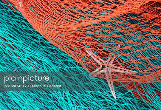 p816m745179 von Magnus Reneflot
