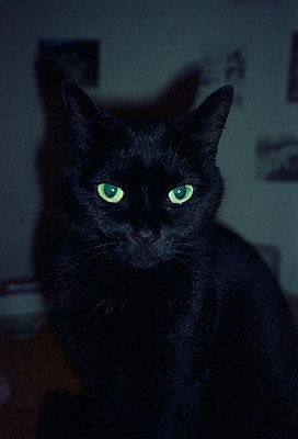 Black cat, green eyes - p1055m951399 by Joseph Charroy