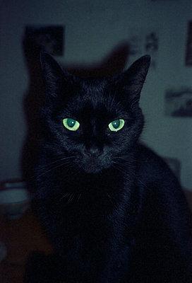 Schwarze Katze, grüne Augen - p1055m951399 von Joseph Charroy