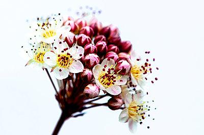 Blume - p1523m2082921 von Nic Fey