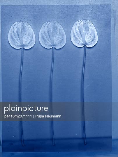 Flamingo flowers - p1413m2071111 by Pupa Neumann
