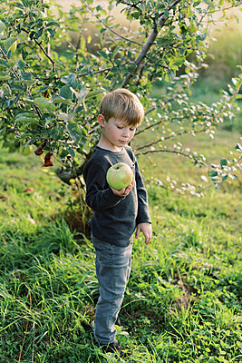 Toddler holding a huge apple he has just picked. - p1166m2151889 by Cavan Images