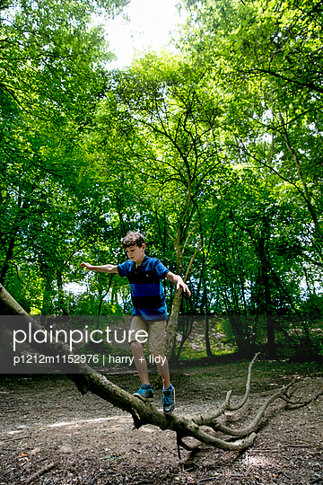 Junge klettert auf einem großen Ast - p1212m1152976 von harry + lidy
