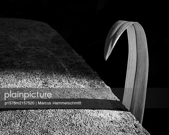 Das neugierige Blatt - p1578m2157520 von Marcus Hammerschmitt