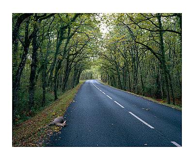 Roadkill - p1118m1553110 by Tarik Yaici