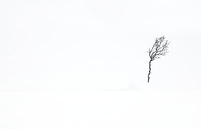 Lonely tree - p1256m2099734 by Sandra Jordan