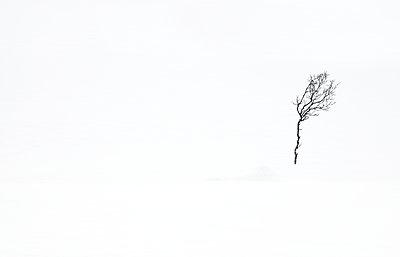 Einsamer Baum - p1256m2099734 von Sandra Jordan
