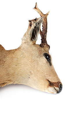 Head of a deer - p4500528 by Hanka Steidle