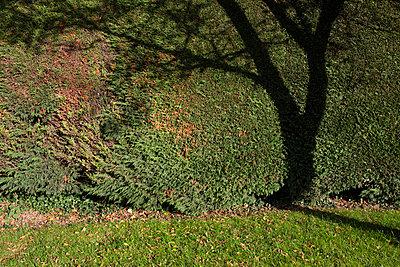 Baum-Silhouette - p1057m858588 von Stephen Shepherd