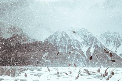 Kaulquappen in den Alpen - p1116m1217065 von Ilka Kramer