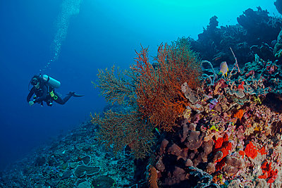 Indonesia, Bali, Nusa Lembonga, Nusa Penida, female diver at tropical coral reef - p300m1535319 by Christian Zappel