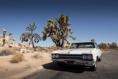 Joshua Tree National Park - p948m940233 by Sibylle Pietrek