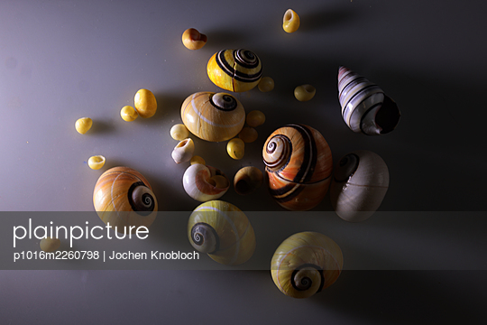 Nubby piano snails, top view - p1016m2260798 by Jochen Knobloch