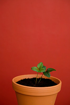 Junge Pflanze - p4540383 von Lubitz + Dorner