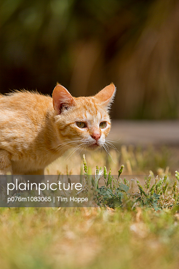 Sneaking Up - p076m1083065 by Tim Hoppe
