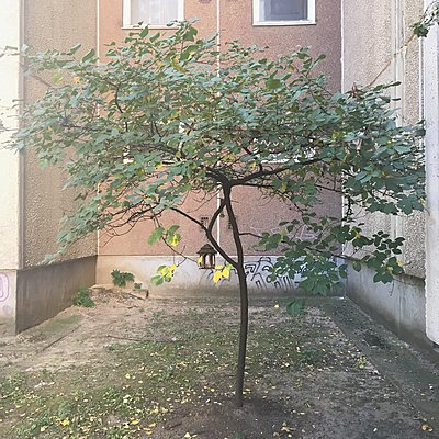 Budapest - p1401m2027401 von Jens Goldbeck
