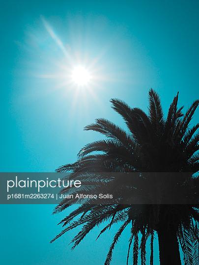 Single palm against the light - p1681m2263274 by Juan Alfonso Solis