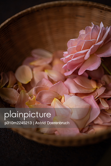 Rose petals 3 - p310m2245213 by Astrid Doerenbruch