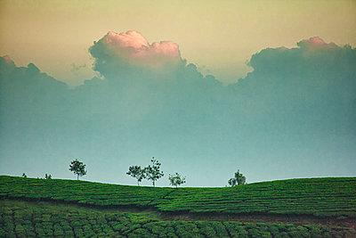 Tea Time - p1553m2128718 by matthieu grospiron