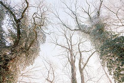 Winter - p570m793428 von Elke Röbken