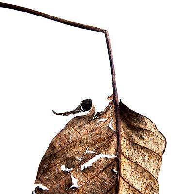 Autumn leaf - p8130252 by B.Jaubert
