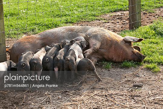 Mutterglück - p781m944861 von Angela Franke