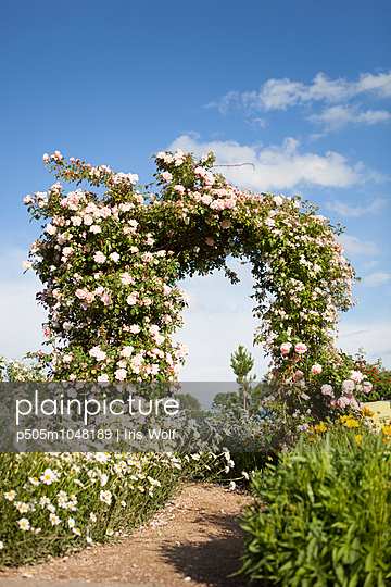 Rose arch with sunshine - p505m1048189 by Iris Wolf