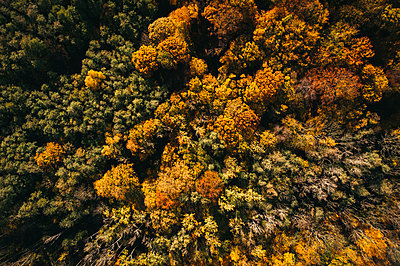 Austria, Lower Austria, aerial view of colorful autumn forest - p300m2144052 by Epiximages