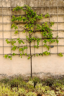 Wall trees - p470m886200 by Ingrid Michel