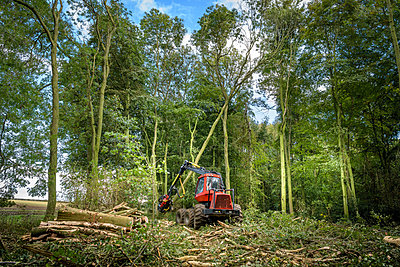 Tree harvesting machine cutting trees in sustainable forest - p924m2271176 by Monty Rakusen