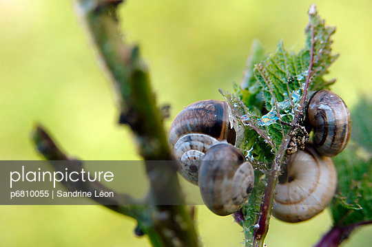 Snail family on a leaf - p6810055 by Sandrine Léon