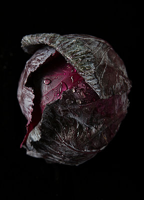 Cabbage Head Detail on Black with Droplets of Water - p1166m2182944 by Cavan Images