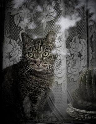 Cat on a window sill - p8430039 by Rea Stein