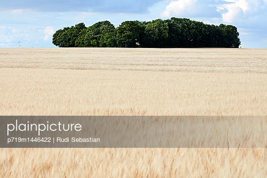 Barley field - p719m1446422 by Rudi Sebastian