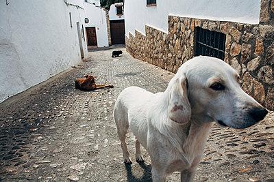 Roaming dogs in Ronda - p1085m1441419 by David Carreno Hansen