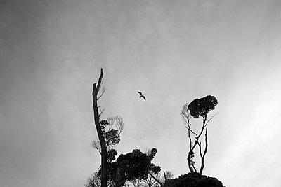 Seagull - p1308m1143913 by felice douglas