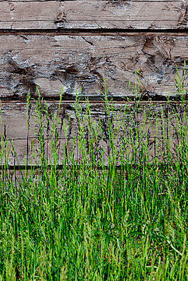 Grass in front of a wooden house - p248m817040 by BY