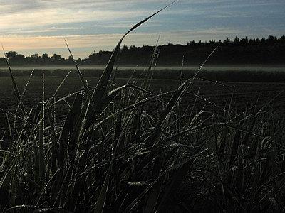 Texel, Niederlande - p627m1035927 von Carolin Seeliger