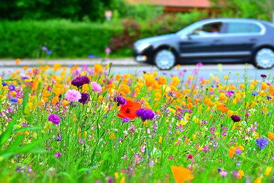 Flower field - p148m2111282 by Axel Biewer