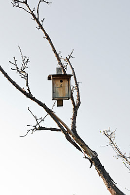 Birdhouse - p212m889941 by Edith M. Balk