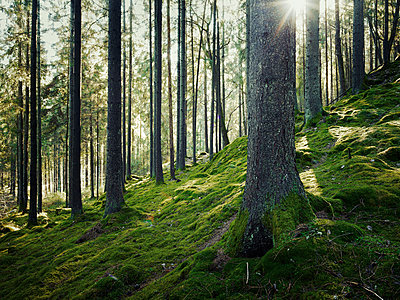 Forest - p312m1164865 by Stefan Isaksson